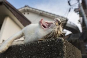 リヴシティ恵比寿 恵比寿 駅から 徒歩10分以内 最上階 の ルーフバルコニー と2口コンロ付きの カウンターキッチン は 新婚 さんや 同棲カップル 向けの物件です。 TV付き浴槽 で 半身浴 しながらのバスタイムも魅力的 ペット は猫可物件になってます!
